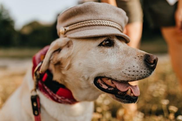 Schöner weißer hund öffnet seinen mund und wirft im frauenhut auf hintergrund des grases auf. Kostenlose Fotos