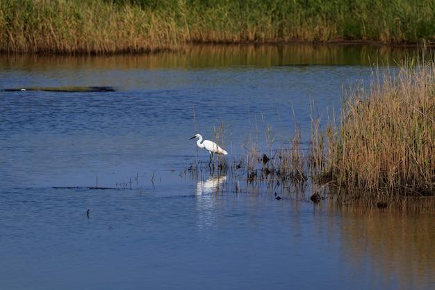 Schöner wilder vogel am natürlichen see Premium Fotos