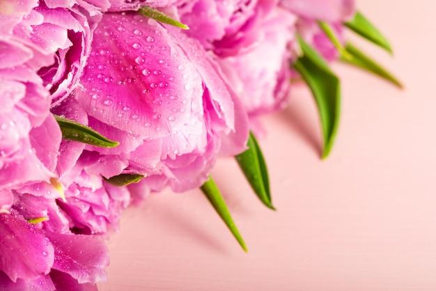 Schönes bündel purpurrote pfingstrosen-art-tulpen Premium Fotos