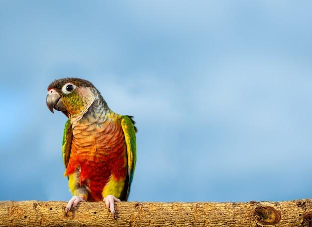 Schönes buntes papageiensitzen Premium Fotos