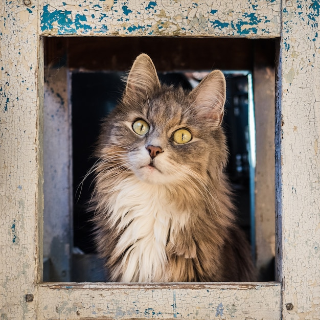 Schönes, flauschiges, graues kätzchen Premium Fotos