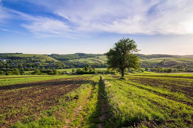 Schönes friedliches frühlingsweites panorama der grünen felder, die sich zum horizont unter klarem hellblauem himmel mit großem grünem baum auf entfernten hügeln und dorfhintergrund erstrecken. landwirtschaft und landwirtschaftskonzept. Premium Fotos