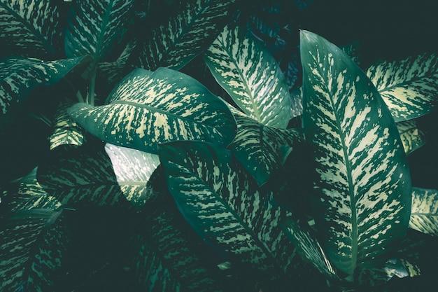 Schönes grünblatt in waldnaturhintergrundideen Premium Fotos
