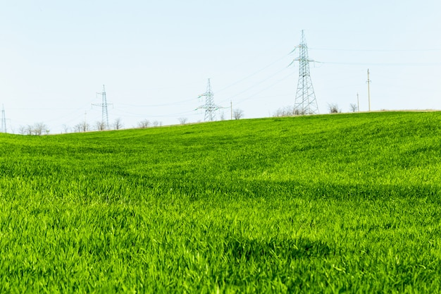 Schönes grünes feld Premium Fotos