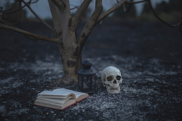 Schönes halloween-konzept mit bannbüchern und dem schädel Kostenlose Fotos