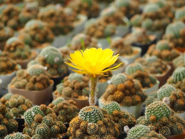 Schönes kaktusbild Premium Fotos