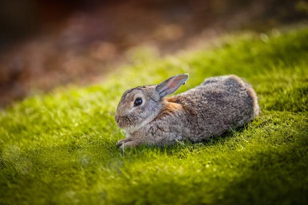 Schönes kaninchen im gras Kostenlose Fotos