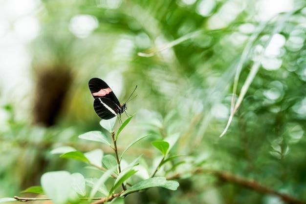Schönheit in der natur. schmetterling auf dem blatt. Premium Fotos