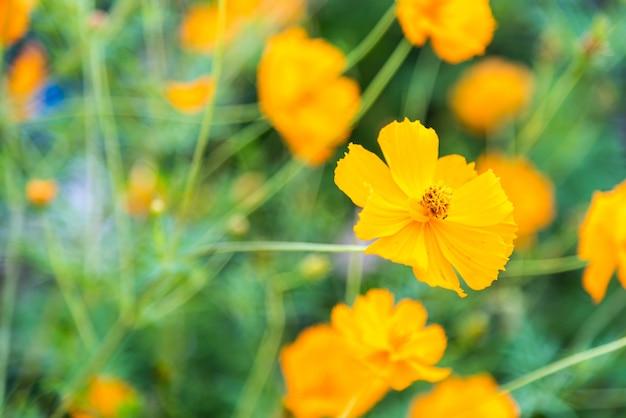schöne Blumen Kostenlose Fotos