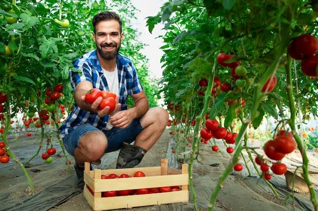 Schuss des jungen bärtigen bauern, der tomaten in seiner hand hält, während er im gewächshaus des bio-lebensmittel-bauernhofs steht Kostenlose Fotos