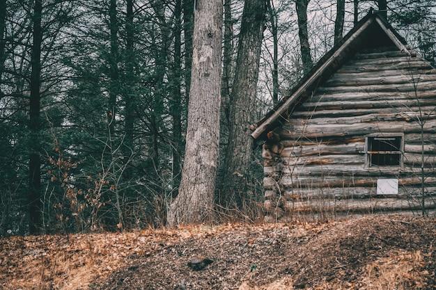 Schuss einer holzhütte nahe bäumen in einem wald Kostenlose Fotos