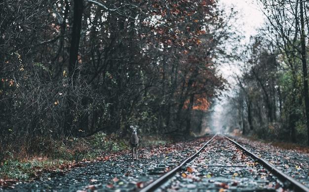 Schuss eines hirsches, der nahe zugbahn zwischen wäldern steht Kostenlose Fotos