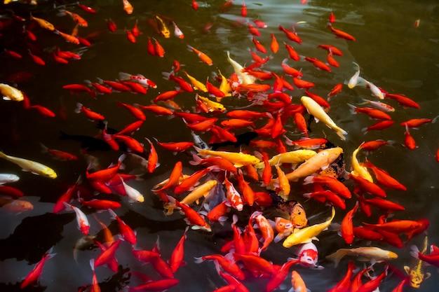 Schwarm von bunten fischen Kostenlose Fotos