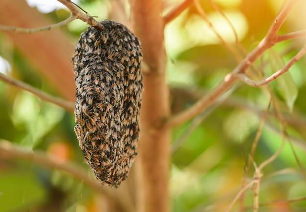 Schwarmbienenstock bienenwabe auf dem baum Premium Fotos