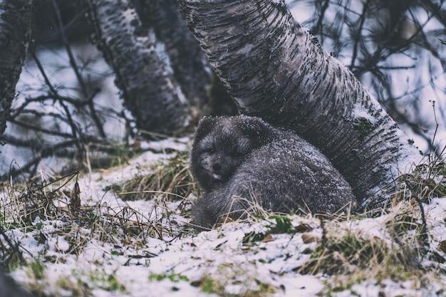 Schwarzbär auf grünem gras während des tages Kostenlose Fotos