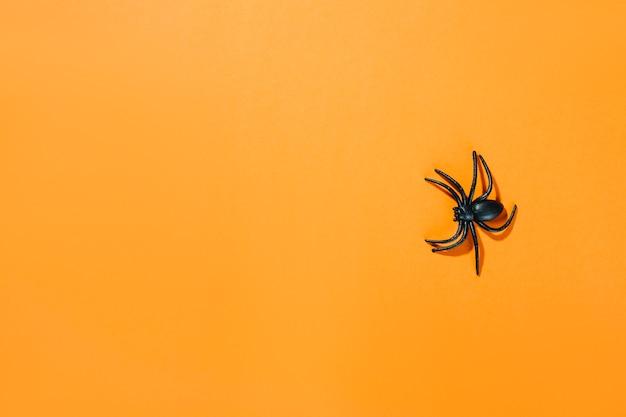 Schwarze dekorative spinne mit langen beinen Kostenlose Fotos