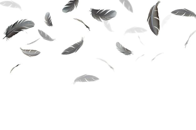 Schwarze federn schweben in der luft, isoliert auf weißem hintergrund. Premium Fotos