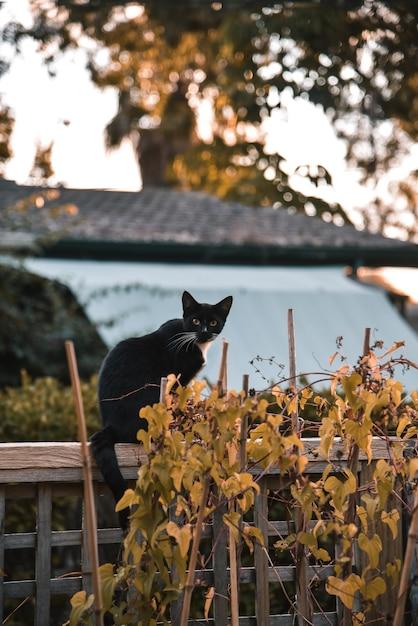 Schwarze katze als symbol von halloween mit orange kürbis Premium Fotos
