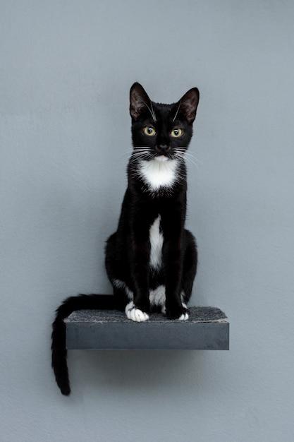 Schwarze katze der vorderansicht, die auf regal sitzt Kostenlose Fotos