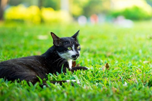 Schwarze katze, die auf der rasenfläche im park stillsteht Premium Fotos