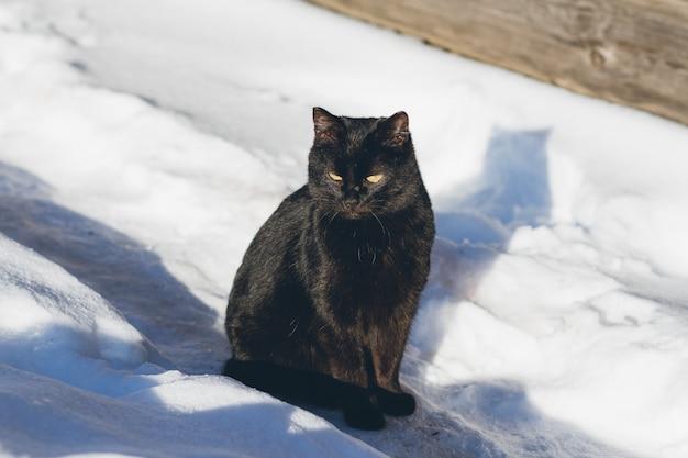Schwarze katze im schnee, der in der sonne sich aalt Premium Fotos