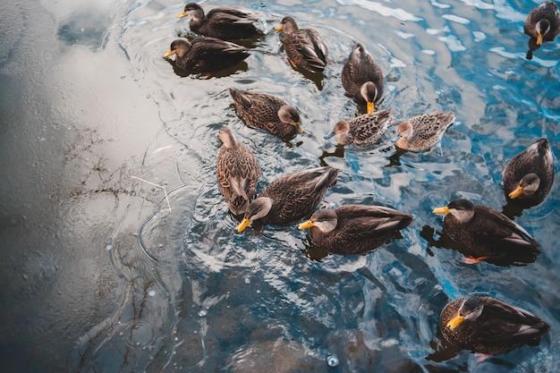 Schwarzer entensohn beruhigt gewässer Kostenlose Fotos