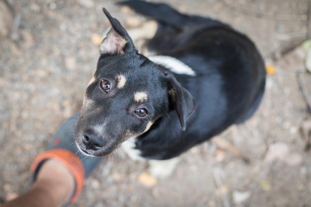 Schwarzer hund, der schauend sitzt Premium Fotos