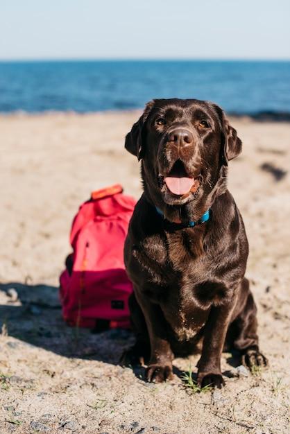 Schwarzer hund, der spaß am strand hat Kostenlose Fotos