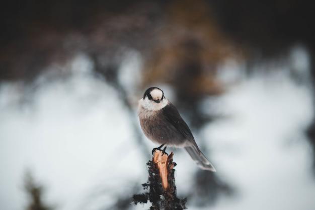 Schwarzer kleiner schnabelvogel auf baum Kostenlose Fotos