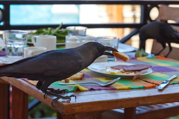 Schwarzer rabe stiehlt essen vom tisch in einem café Premium Fotos
