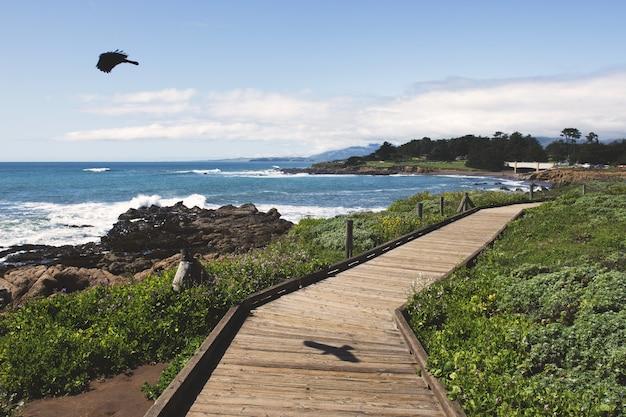 Schwarzer vogel, der über den ozean nahe einem hölzernen weg während des tages fliegt Kostenlose Fotos