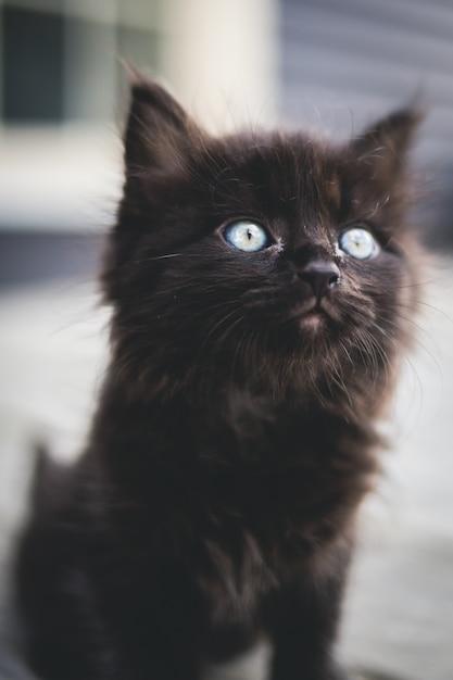 Schwarzes kätzchen auf weißer oberfläche Kostenlose Fotos