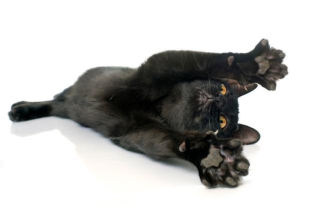 Schwarzes kätzchen spielen Premium Fotos