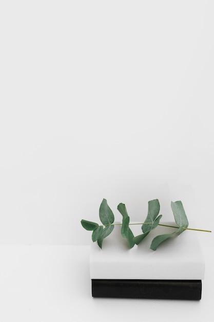 Schwarzweiss-deckungsbücher mit dem grünen zweig gegen weißen hintergrund Kostenlose Fotos