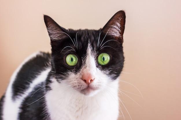 Schwarzweiss-katze mit großen grünen augen untersucht gerade die kamera. Premium Fotos