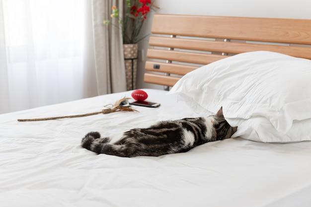 Schwarzweiss-katzenschlaf auf gemütlichem weißem bett im modernen schlafzimmerinnenraum Premium Fotos