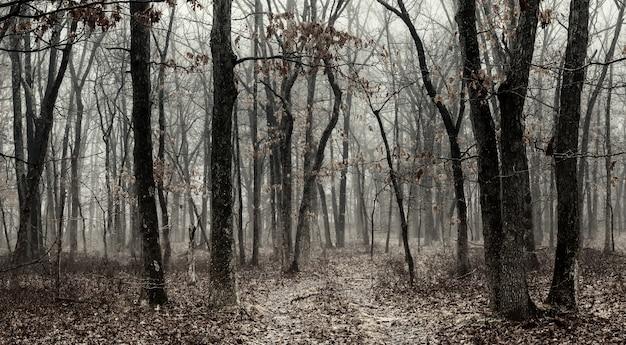 Schwarzweiss-nebel in einem schönen wald nadelwald im morgengrauen Premium Fotos