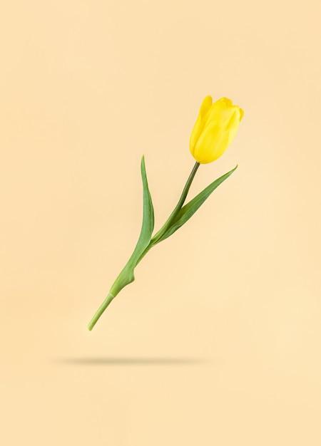 Schwebende gelbe tulpe auf beigem hintergrund und schatten darunter. mimimalistisches feiertags-foto auf lager. Premium Fotos
