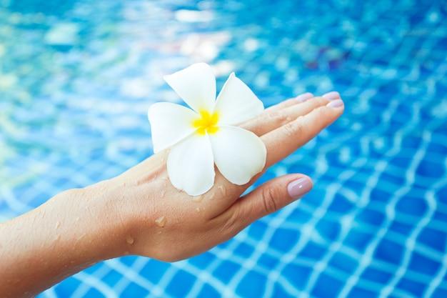 Schwimmende frangipani-blüten im pool Premium Fotos