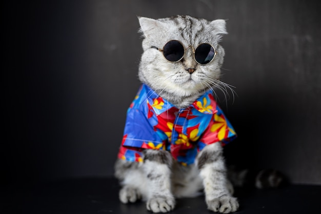 Scottish fold cat tragen eine sonnenbrille und ein hemd. Premium Fotos
