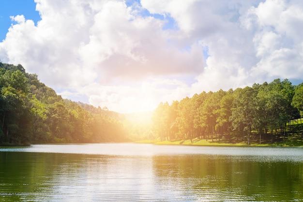 See mit bäumen bei sonnenuntergang Kostenlose Fotos