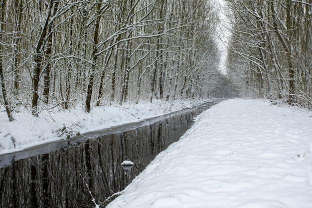 See mitten in schneebedeckten feldern mit schneebedeckten bäumen Kostenlose Fotos