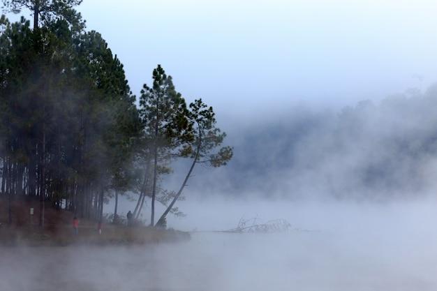 See und kiefernwald am morgen um Premium Fotos