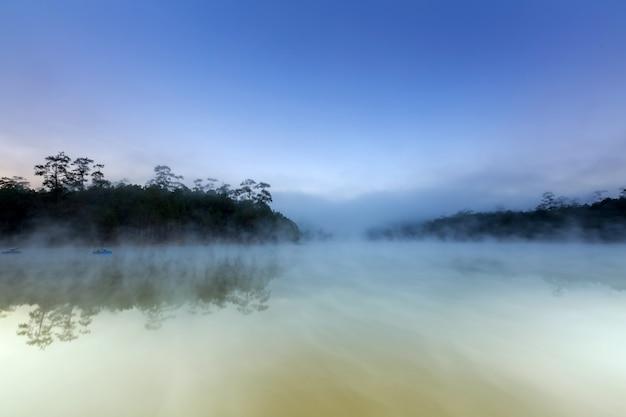 See- und kiefernwald am morgen Premium Fotos