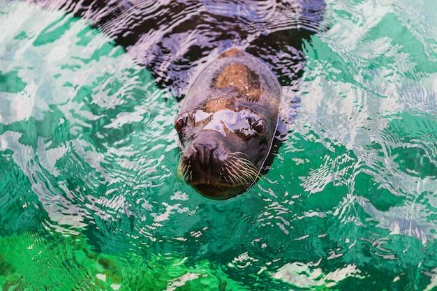 Seelöwen Kostenlose Fotos