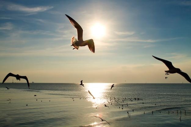 Seemöwen, die den abendsonnenuntergang im meer fliegen Premium Fotos