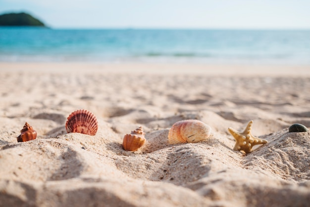 Seestern mit muscheln im sand Kostenlose Fotos