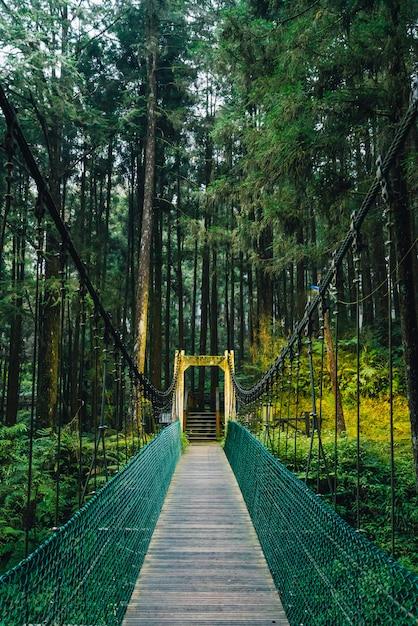 Seilbrücke zum wald in alishan national forest recreation area in chiayi-grafschaft, alishan-gemeinde, taiwan. Premium Fotos