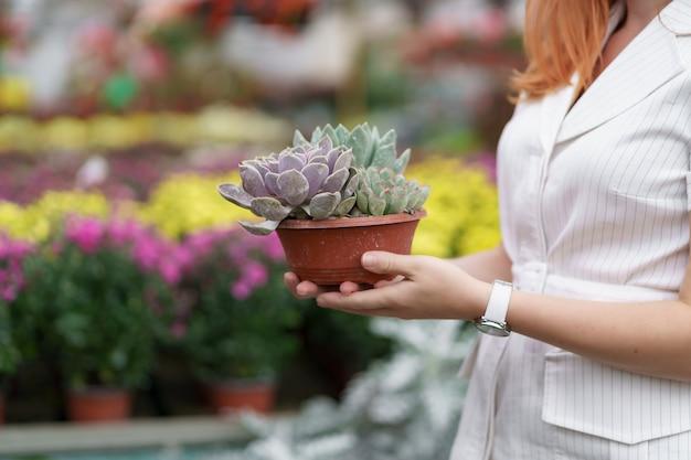 Seitenansicht an frauenhänden, die sukkulenten oder kaktus in töpfen mit anderen bunten blumen halten Kostenlose Fotos