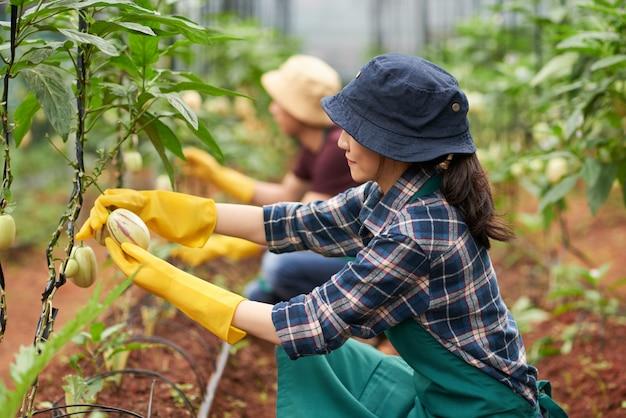 Seitenansicht des weiblichen agronomen kniend in der anlage Kostenlose Fotos